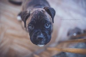 Állatfotózás_állat-fotózás_01