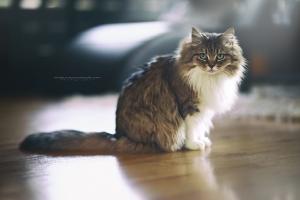 Állatofotózás , állat fotózás , kutya fotózás (2)