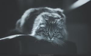 Állatofotózás , állat fotózás , kutya fotózás (5)