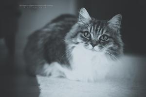 Állazfozózás-allat-fotozas-macska